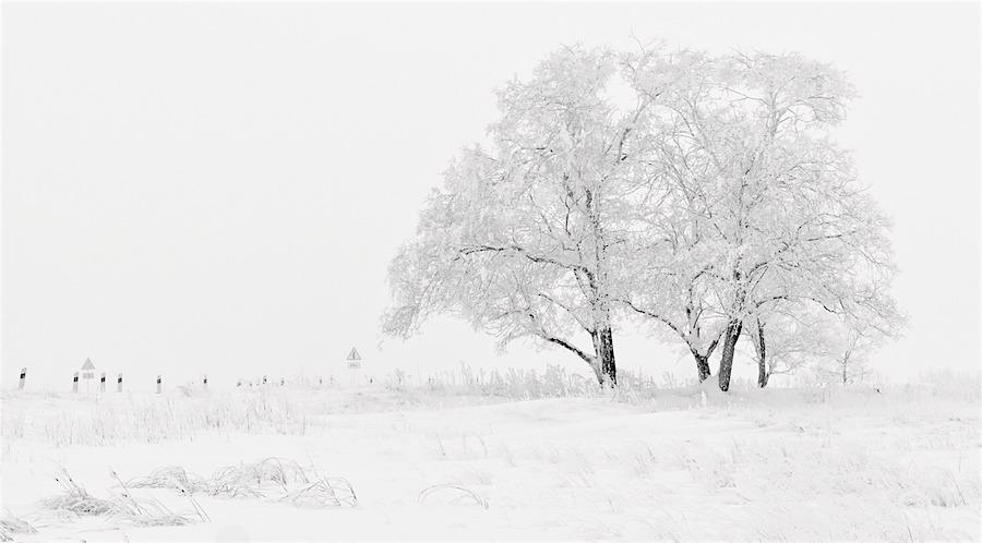 winter & tea observances – Chapter One
